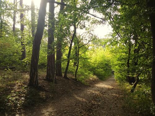 Die Wanderroute führte westlich aus dem schönen Ilsenburg raus.