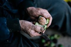 Man peeling the walnut skin off of the walnut.