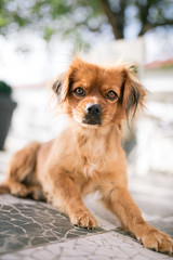 Cute little dog posing outdoors.