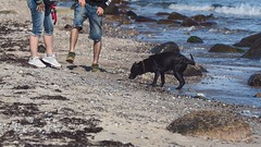 """Look here dog: """"So you have to shake yourself!"""" 