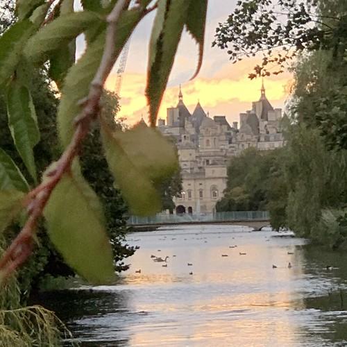 St James's Park sunset willow plane