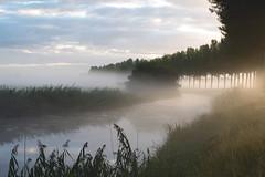 De Noorderels, Biesbosch, Dordrecht