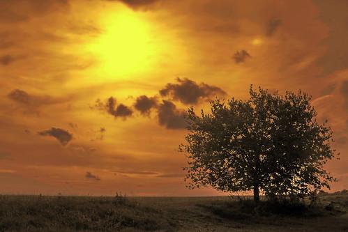 Lonely tree / Magányos fa