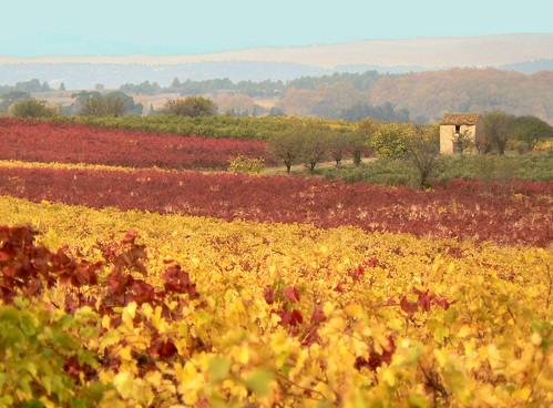 Automne en Languedoc