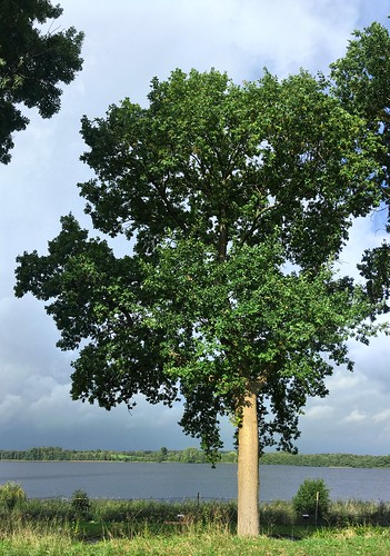 Lake view | Tree panorama | October 7, 2020 | Bornhöved - Schleswig-Holstein - Germany