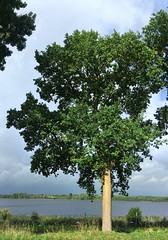 Lake view   Tree panorama   October 7, 2020   Bornhöved - Schleswig-Holstein - Germany