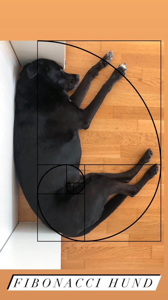 Fibonacci Hund: schwarzer Hund schläft in so einer Position, die der goldenen Spirale entspricht