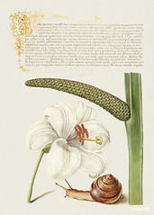 Madonna Lily, Terrestrial Mollusk, and Sweet Flag from Mira Calligraphiae Monumenta or The Model Book of Calligraphy (1561–1596) by Georg Bocskay and Joris Hoefnagel. Original from The Getty. Digitally enhanced by rawpixel.