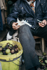 Old man peeling walnuts with a cat in his lap.
