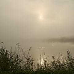 Misty sunrise on the lake