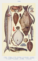 Fish II: Crab, Oyster, Eel, Mussel, Lemon Sole, Halibut, Prawn, Sturgeon, Trout, Sprat, Brill, Escallop, Lamprey, Whitebait, Lobster, and Dover Sole from Mrs. Beeton's Book of Household Management. Digitally enhanced from our own 1923 edition.