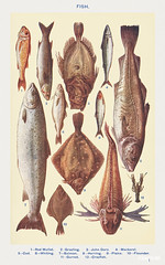 Fish I: Red Mullet, Grayling, John Dory, Mackerel, Cod, Whiting, Salmon, Herring, Plaice, Flounder, Gurnet, and Crayfish from Mrs. Beeton's Book of Household Management. Digitally enhanced from our own 1923 edition.