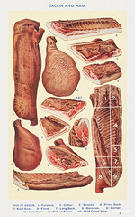 Bacon and Ham: Side of Bacon, Forelock, Collar, Streaky, Prime Back, Small Back, Flank, Long Black, Gammon, Corner, York Ham, Side of Bacon, and Mild Cured Ham from Mrs. Beeton's Book of Household Management. Digitally enhanced from our own 1923 editi