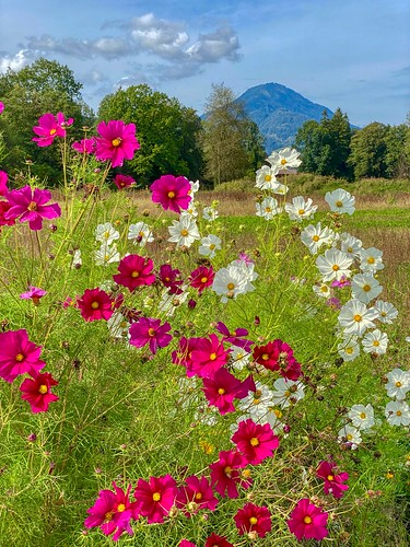 Autumn flowers in Kiefersfelden in Bavaria, Germany