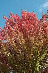 Autumn colors @ Parc Vignières-Pommaries @ Annecy-le-Vieux
