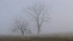 Tree's In Fog.