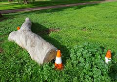 Beware the Big Log