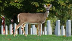 Memorial Lake State Park & Indiantown Gap National Cemetery