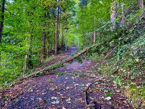 Tree fallen on a footpath in Kiefersfelden in Bavaria, Germany