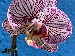 All Orchids!