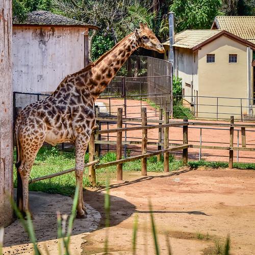 Passeio ao zoológico!