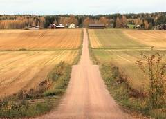 """""""Road to farm"""""""
