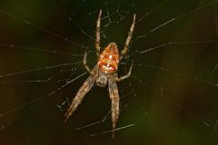 Spiders of Denmark