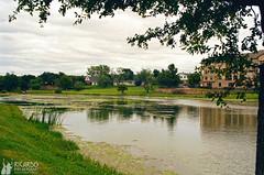 Summer Algae on the Lake