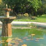 Panteg Park Fishpond