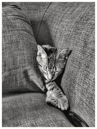 Camouflage, kitten style.