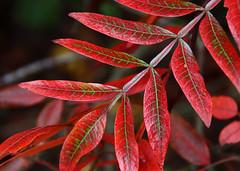 pretty autumn red