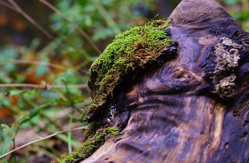 Munich - Moss on Wood