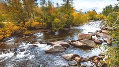 Big Thompson River and Fall Foliage