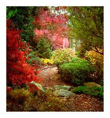 Path in a Japanese Garden