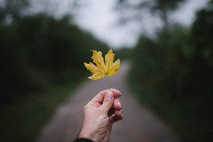 Man holding a yellow dry maple leaf in his hand.