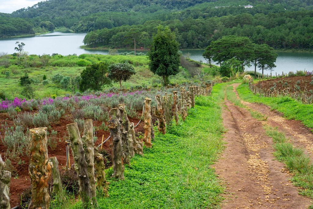 Nature Walkway at Lavendergardens with Tuyen Lam Lake in Dalat, Vietnam
