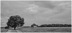 Tree -- House