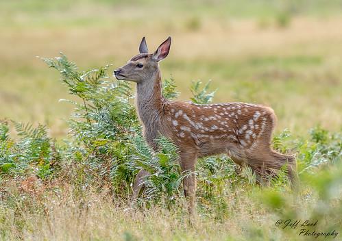 Jeff Lack Wildlife&Nature