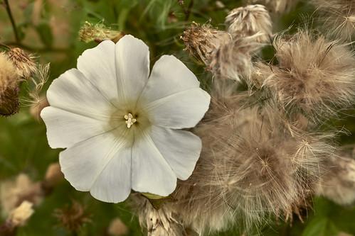 Einfaches Blumenfoto