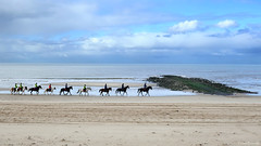 Julianadorp beach: horses on the shore