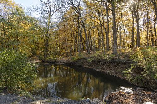 Morton Arboretum in the Morning
