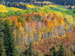 Last Dollar Road Telluride Peak Autumn Colors Fall Foliage Colorado Aspens Fuji GFX100 Fine Art Landscape Nature Photography! Elliot McGucken 45EPIC Master Medium Format Photographer Fuji GFX 100 & Fujinon Fujifilm GF Lens!