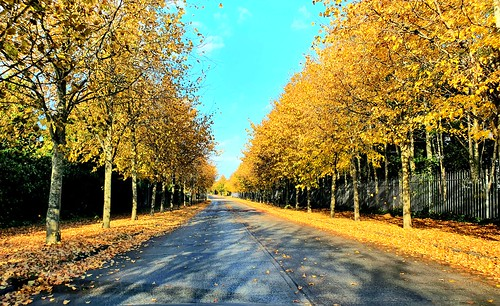 Autumn 🍂 Road my favourite time of the year.