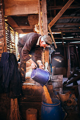Old man pouring corn kernels from bucket to a barrel in his barn.
