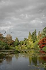 Sheffield Park Lake