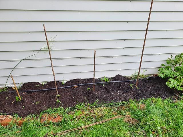 Brick lined garden beside the garage 🍅🧱