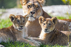 Mother and daughters II