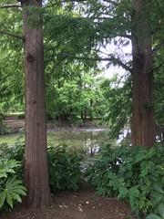 Sarue Park in Koto-ku