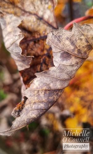 Autumn Decay 🍂