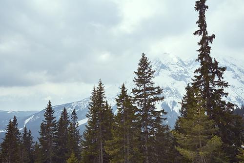 Trees before Mountain
